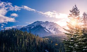 冬季大山中的森林美景摄影图片