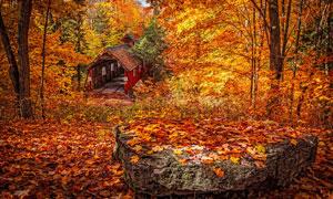 秋季树林中的落叶美景摄影图片