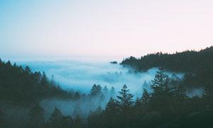 雾气蒙蒙的森林高清摄影图片