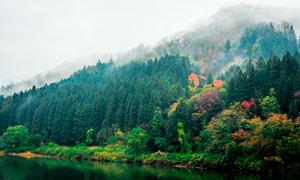 绿色山林中的雾气景观摄影图片