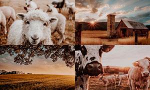 6款農場照片暗色電影效果LR預設