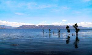 洱海中的树木摄影图片