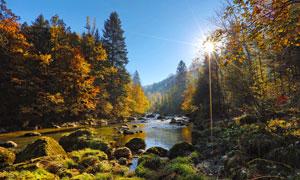 阳光下山林中的小溪流水摄影图片