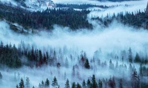 雾气朦胧的山林美景摄影图片