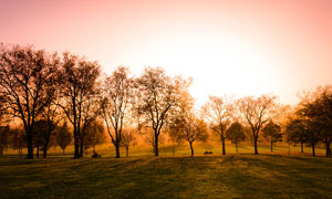 公园中逆光下的树木美景摄影图片