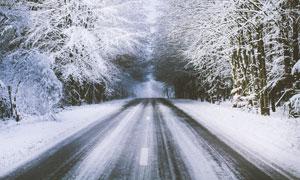 冬季雪后林中道路景观摄影图片