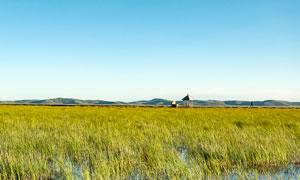 若尔盖草原花湖湿地美景摄影图片