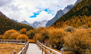 稻城亚丁栈桥秋季美景摄影图片