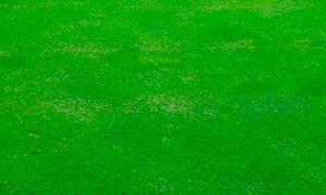 绿色草地背景高清摄影图片素材