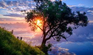 夕阳下湖边的大树特写摄影图片