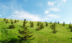 山坡上的绿色草地和树木摄影图片