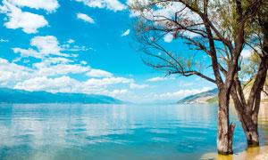 蓝天白云下的湖泊和树木摄影图片