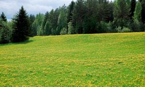 山坡上的野花和草地摄影图片