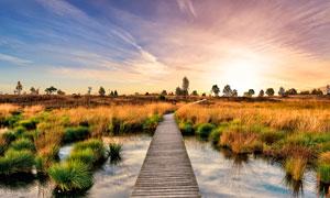 夕阳下的湿地公园里的栈道摄影图片