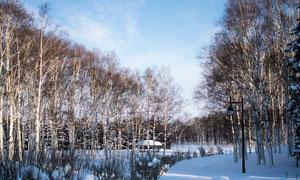 冬季树林雪后美景摄影图片
