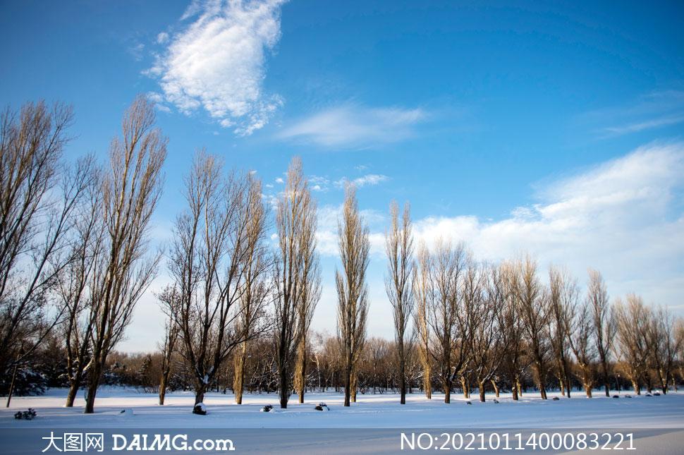 蓝天下树林雪后美景摄影图片