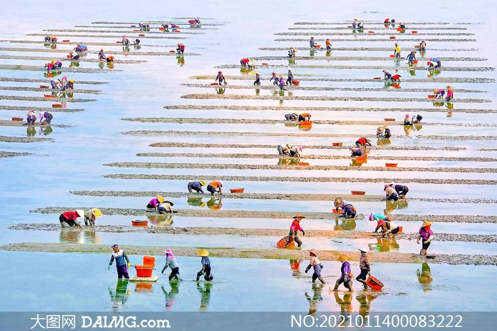 霞浦浅海滩上辛勤劳作的渔民摄影图片