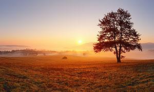 夕阳下田园上的大树美景摄影图片