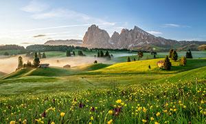 田园上美丽的花草摄影图片