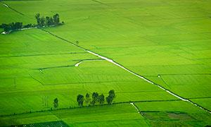 田园中绿油油的农田摄影图片