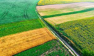 原野中的农田航拍图摄影图片