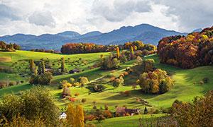 山坡上的绿色草地和树林摄影图片