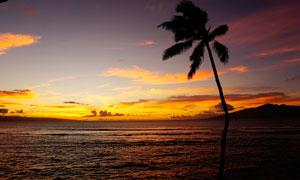 傍晚海边椰树剪影摄影图片