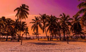 傍晚沙滩上的椰树林摄影图片