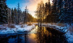 傍晚森林中的池塘景觀攝影圖片