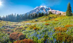 山坡上的美麗花草攝影圖片