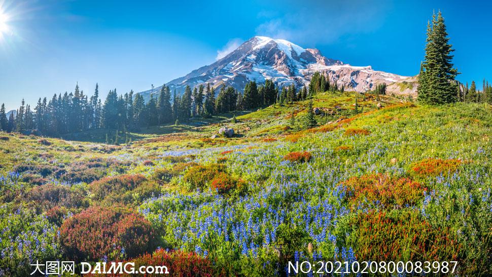 山坡上的美丽花草摄影图片