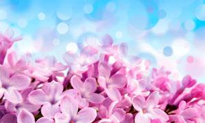 夢幻的粉色花朵特寫攝影圖片