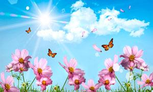陽光下的粉紅色花朵攝影圖片