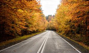 秋季森林中的公路美景摄影图片