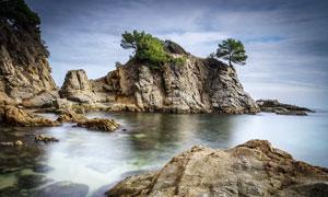 海边的礁石和树木摄影图片