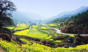 大山中的山村和油菜花地摄影图片