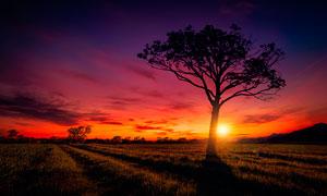 田園夕陽下的大樹景觀攝影圖片