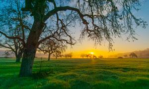 夕陽下的大樹和草地攝影圖片