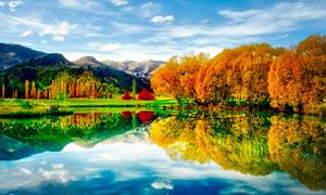 秋季湖泊邊的金色樹木美景攝影圖片