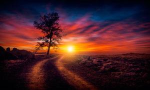 夕陽下的大樹和小路攝影圖片