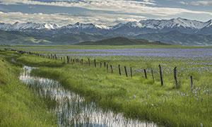 雪山下的湖邊水草景觀攝影圖片