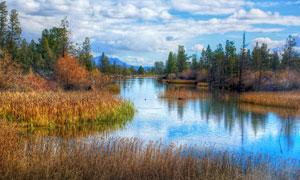 秋季湖邊枯萎的水草風光攝影圖片