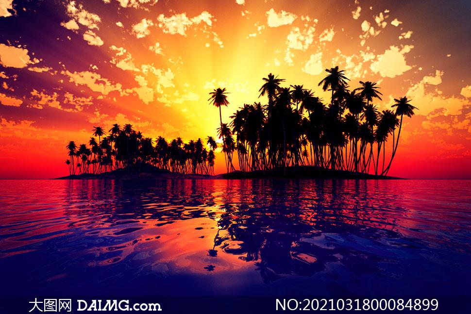 夕陽下海島上的椰樹林剪影攝影圖片