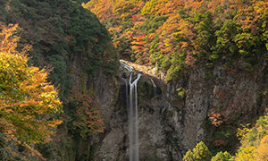 秋季大山中的樹林和瀑布攝影圖片