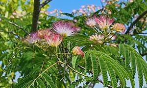 枝頭上的薰衣草和薰衣草花攝影圖片