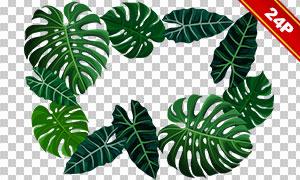 热带绿叶植物绿叶主题免抠图片素材
