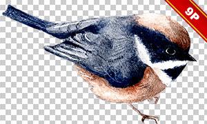 麻雀与刺猬等动物水彩创意免抠素材