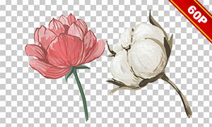 莲蓬与棉花等水彩元素免抠图片素材