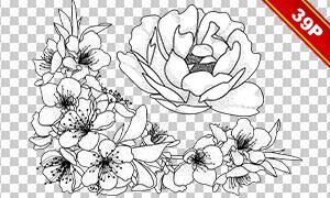 黑白线描手绘花朵植物免抠图片素材