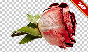 复活节彩蛋与花朵主题免抠图片素材
